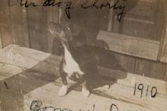 "1910 "" Bonney's Dog, Our dog Shorty"""
